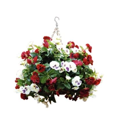 """Picture of Burgundy & White Pansy Hanging Basket Ball 22"""""""