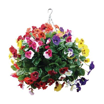 """Picture of Mixed Colours Pansy Hanging Basket Ball 22"""""""